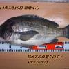 電車釣行で渚釣り、クロダイ48.5cm出ました!