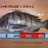 雨天の釣りでクロダイ47cm1860g!