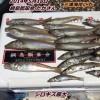 三浦海岸でシロギス20.5cmゲット!