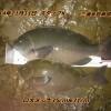 11/11にメジナ釣りに行ってきました!