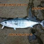 南伊豆地磯でハガツオ釣れました!