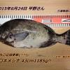 リベンジ成功!口太メジナ43cm1185g!(^^)!