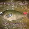 夜磯で大型口太メジナ46cm1400g!