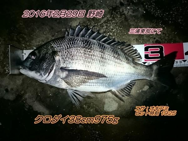 DSC_0247