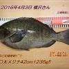 自己記録更新!口太メジナ42cm1235g!