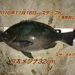 11/16(水)と17(木)は2夜連続の半夜釣行