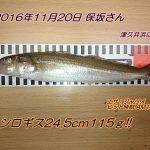 シロギス24.5cm115gゲット!