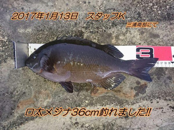 DSC_0212