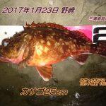 カサゴ25cm&口太メジナ30cmゲット!