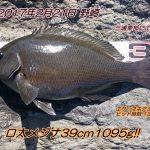 2/21(火) シケ残りのメジナ釣行記