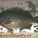 腹パン口太メジナ37cm!