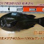 口太メジナ40.5cm1060gゲット!