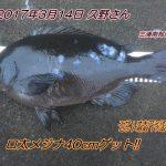 口太メジナ40cm&マコガレイ33cm!