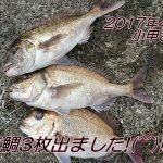 フカセ真鯛48cm~45cm×3枚!