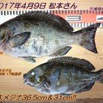 口太メジナ36.5cm920g&31cm!