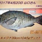 口太メジナ39cm1045gゲット!