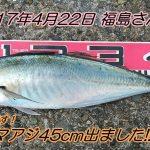 超良型マアジ45cm&クロダイ41cm!