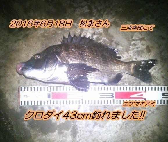 kimg1167-1