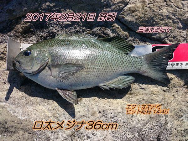 DSC_0211